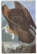 L aigle royal ecole descartes - Restaurant l aigle d or azay le rideau ...